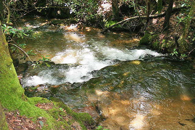 Trout stream and national forest acreage for sale dover for Georgia trout fishing map